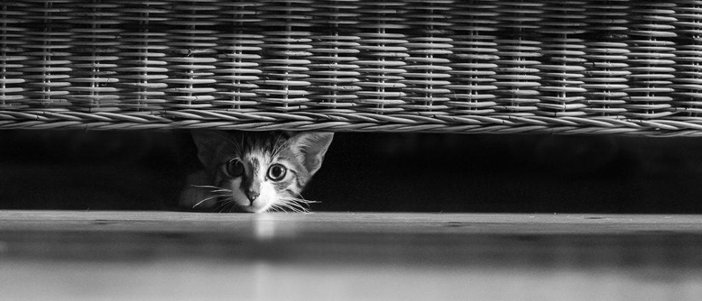 © Nikas Welt - Fotografie
